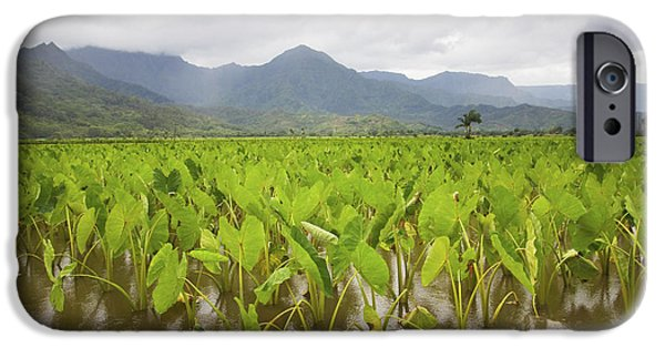 Hawaiian Food iPhone Cases - Taro field iPhone Case by Ron Dahlquist - Printscapes
