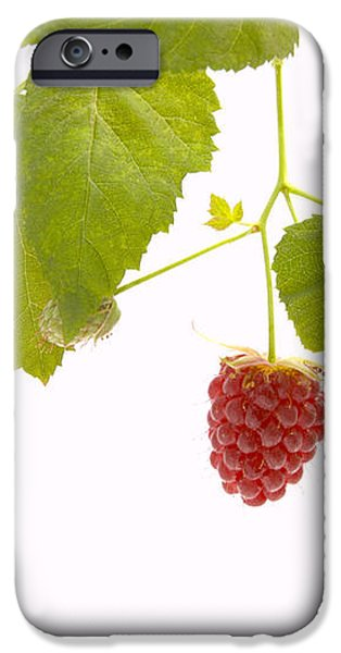 Tayberry iPhone Case by Andy Smy