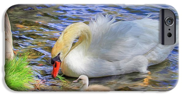Swans... iPhone Cases - Teachings iPhone Case by Donna Kennedy