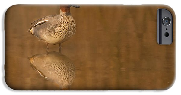 Animals Photographs iPhone Cases - Teal  iPhone Case by Paul Neville