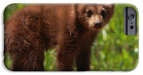 Bear Cub iPhone Cases - Ted E. Bear iPhone Case by Bruce J Robinson
