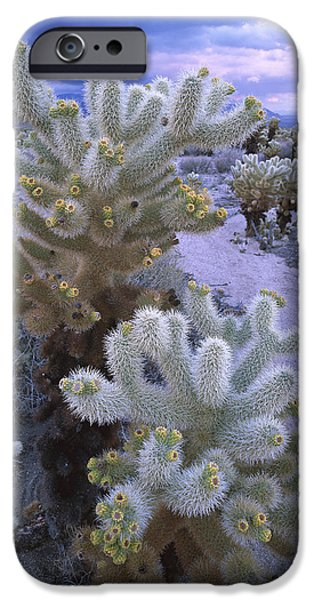 Teddybear iPhone Cases - Teddy Bear Cholla in Joshua Tree NP iPhone Case by Tim Fitzharris