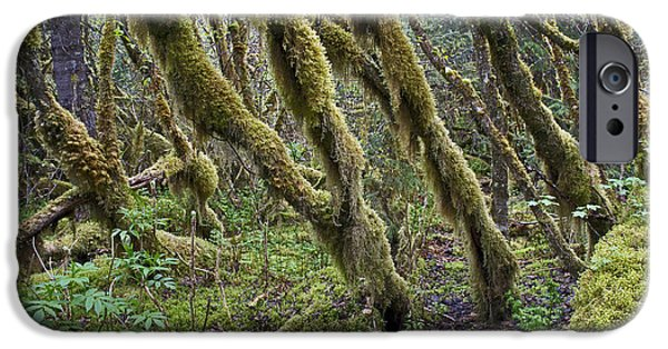 Rainy Day iPhone Cases - Temperate Rainforest Trees iPhone Case by Cathy Mahnke