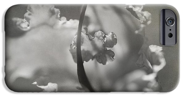Flora iPhone Cases - Tenderness iPhone Case by Laurie Search