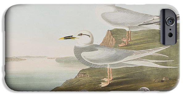Tern iPhone Cases - Terns iPhone Case by John James Audubon