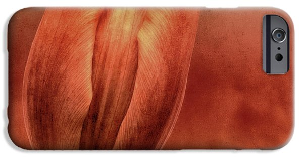 Rust iPhone Cases - Terracotta iPhone Case by Wim Lanclus
