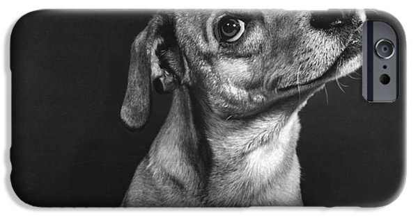 Animal Portraiture iPhone Cases - Terrier iPhone Case by Ylla