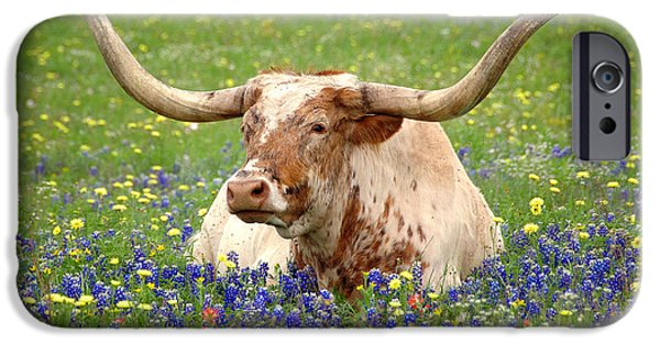Floral Art iPhone Cases - Texas Longhorn in Bluebonnets iPhone Case by Jon Holiday
