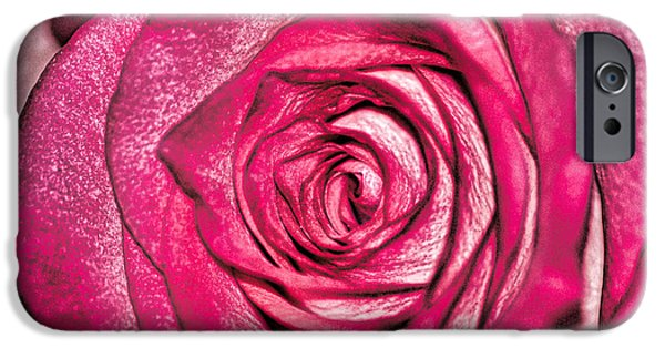 Pink Roses iPhone Cases - Texture of a Rose iPhone Case by Martin Newman