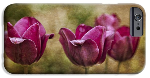 Arkansas iPhone Cases - Textured Tulips iPhone Case by Tony  Colvin