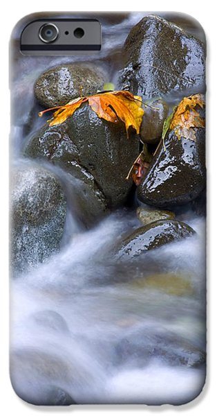 Maple iPhone Cases - Textures of Autumn iPhone Case by Mike  Dawson