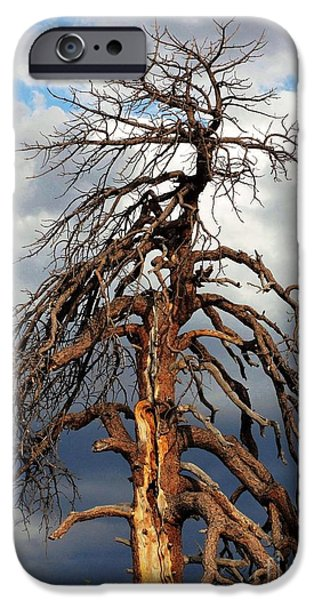 Creepy iPhone Cases - That Big Old Tree iPhone Case by Natalie Ortiz