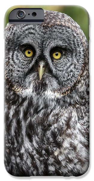 Disc iPhone Cases - That Wise Old Owl D9061 iPhone Case by Wes and Dotty Weber