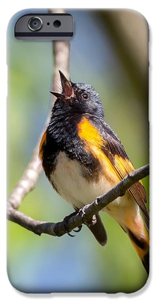 Warbler iPhone Cases - The American Redstart iPhone Case by Bill Wakeley