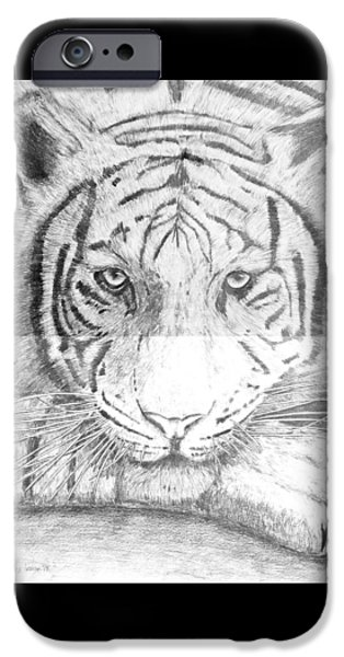 The Tiger Drawings iPhone Cases - The Amur Tiger iPhone Case by Alexander Ivanov