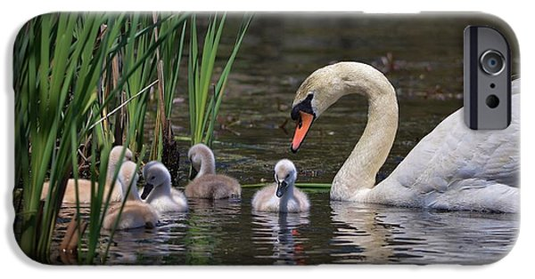 Baby Bird iPhone Cases - The Baby Swans with Mom iPhone Case by Linda  Howes