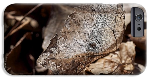 Leaves iPhone Cases - The Beauty of the End iPhone Case by Rona Black