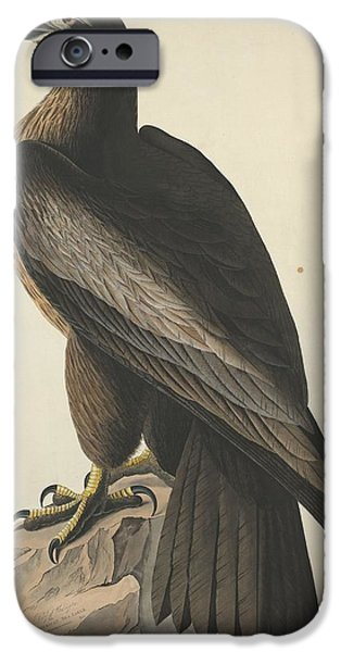 Drawing Of Eagle iPhone Cases - The Bird of Washington or Great American Eagle iPhone Case by John James Audubon