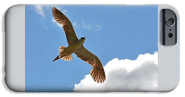 Autumn iPhone Cases - The Black-crowned Night-heron like an angel in the sky iPhone Case by Asbed Iskedjian