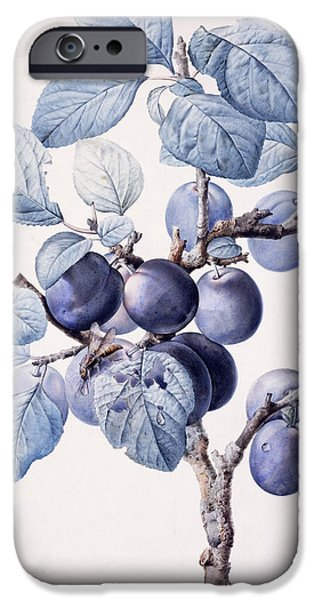 Plum iPhone Cases - The Branch of a Plum Tree iPhone Case by Pierre Joseph Redoute