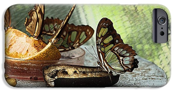Bugs Pyrography iPhone Cases - The Buffet iPhone Case by Brock Tinney