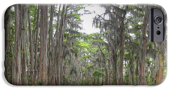 Caddo Lake iPhone Cases - The Cathedral at Caddo Lake 1 iPhone Case by Rob Greebon