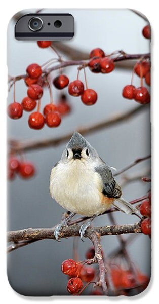 Tufted Titmouse iPhone Cases - The Color Red iPhone Case by Betty LaRue