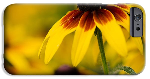 Floral Photographs iPhone Cases - The Colors Of Summer iPhone Case by Nick  Boren