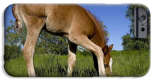 Animals Photographs iPhone Cases - The Colt iPhone Case by Michael Mogensen