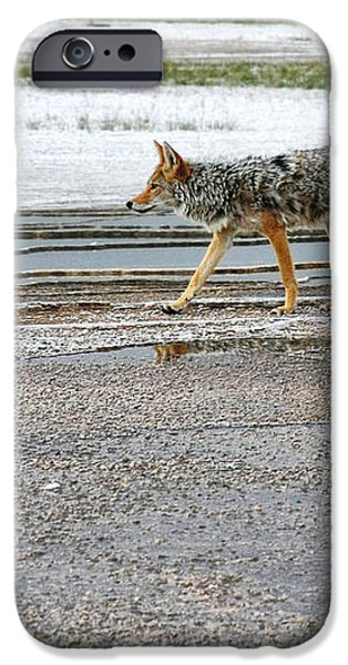 The Coyote - Dogs are by far more dangerous iPhone Case by Christine Till