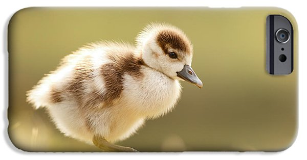 Cute Bird iPhone Cases - The Cute Factor - Egyptean Gosling iPhone Case by Roeselien Raimond
