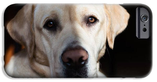 Cute Puppy iPhone Cases - The Dark Side Of The Lab iPhone Case by Kaloyan Kanev