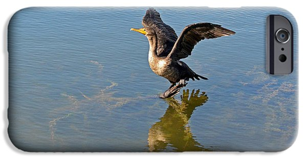 Flight iPhone Cases - The Double-crested Cormorant iPhone Case by Asbed Iskedjian