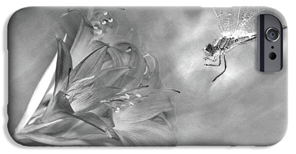 Linda Lees iPhone Cases - The Dragonfly and the Flower iPhone Case by Linda Lees