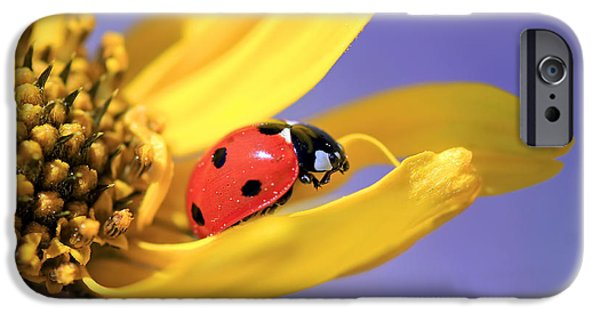 Ladybug iPhone Cases - The End iPhone Case by Donna Kennedy