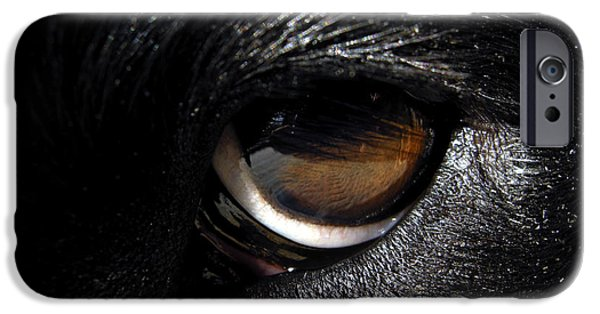 Dog Close-up iPhone Cases - The eyes have it iPhone Case by Chip Laughton