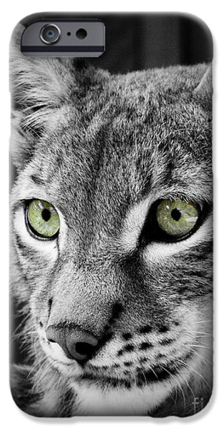 Lynx iPhone Cases - The Eyes iPhone Case by Tara Turner