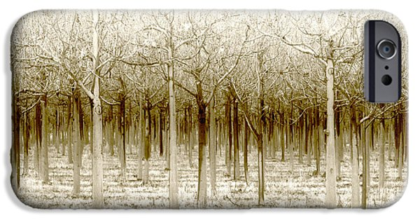 Forest Digital iPhone Cases - The Forest for the Trees iPhone Case by Holly Kempe