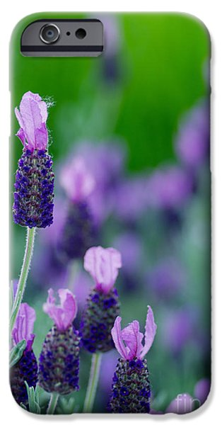 Bloosom iPhone Cases - The Fuzzy One iPhone Case by Nick  Boren