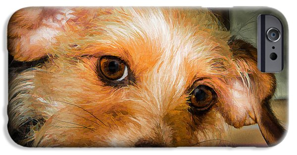 Dog Close-up iPhone Cases - The Gentle Look Of Mans Best Friend iPhone Case by Barbara Fagan Sullivan