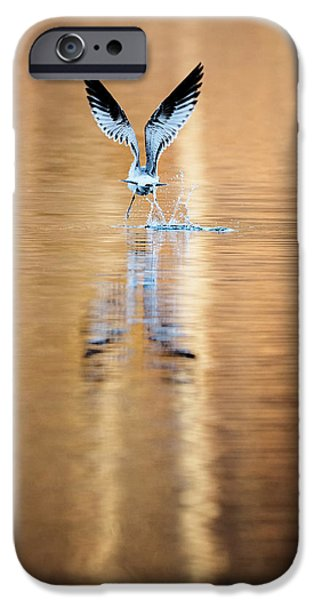 Seagull iPhone Cases - The Gift of Flight iPhone Case by Bill Wakeley