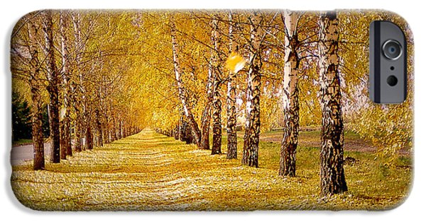 Meadow Photographs iPhone Cases - The Golden Birch Alley iPhone Case by Lana Art