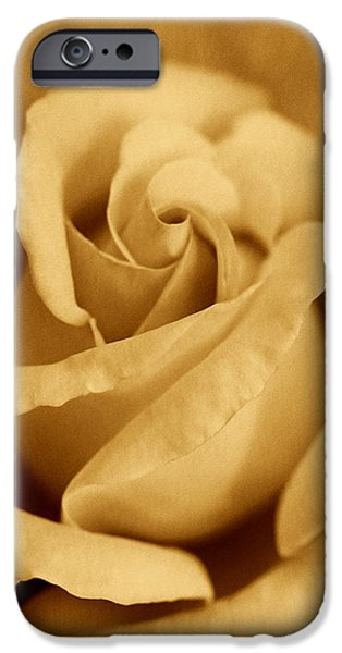 Gold Roses iPhone Cases - The Golden Vintage Rose iPhone Case by Jennie Marie Schell