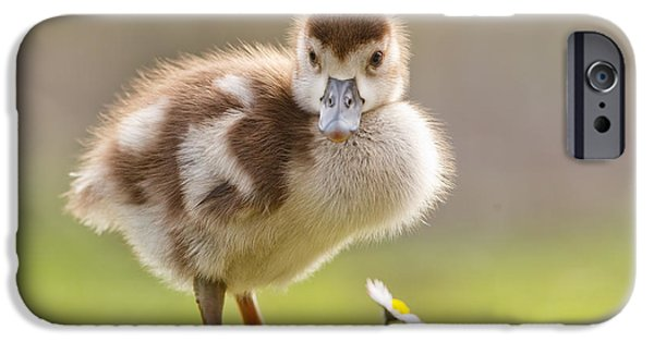 Cute Bird iPhone Cases - The Gosling and the Flower iPhone Case by Roeselien Raimond