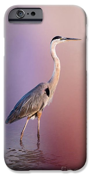 Flying Seagull iPhone Cases - The Great Blue Heron by Darrell Hutto iPhone Case by Darrell Hutto