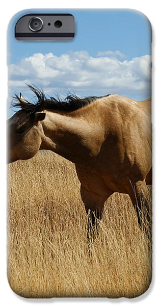The Horse iPhone Case by Ernie Echols