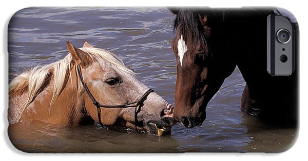 Bathing iPhone Cases - The horse kiss iPhone Case by Michael Mogensen