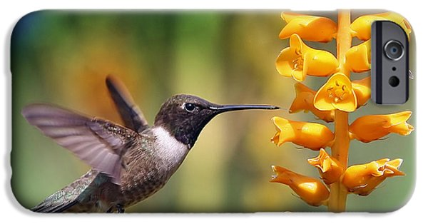 Recently Sold -  - Fauna iPhone Cases - The hummingbird and the bee iPhone Case by William Lee