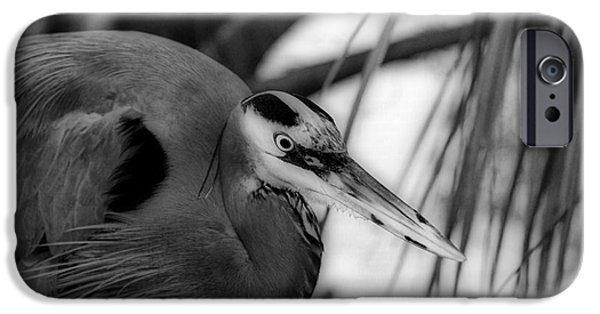 Photos Of Birds iPhone Cases - The Hunter iPhone Case by Skip Willits