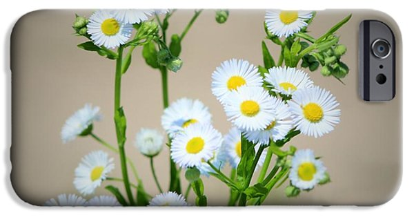 Recently Sold -  - Maine iPhone Cases - The Lazy Daisies of Summer iPhone Case by Claudette Letendre